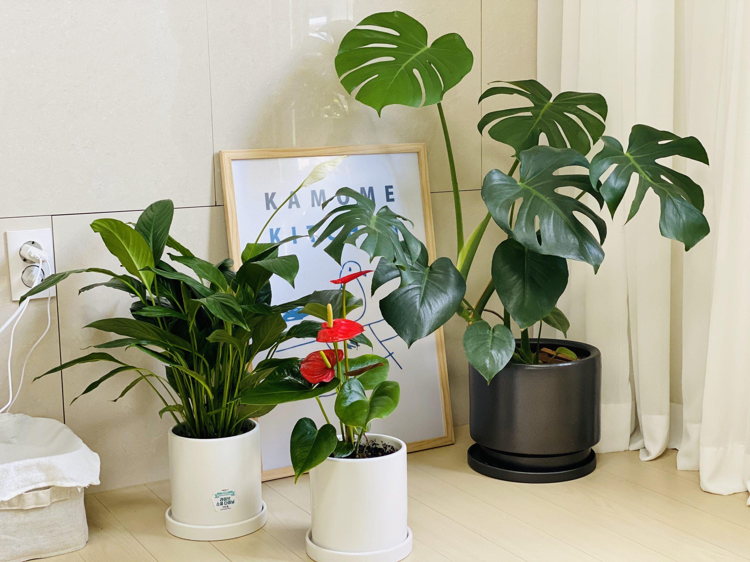 [우리함께 마실가요] 햇살정원과 함께하는 우리집 초록공간 반려식물 기르기(공기정화식물) 후기